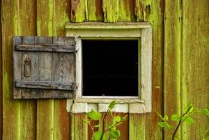 Algen- und Pilzbefall an der Fassade? Was tun?